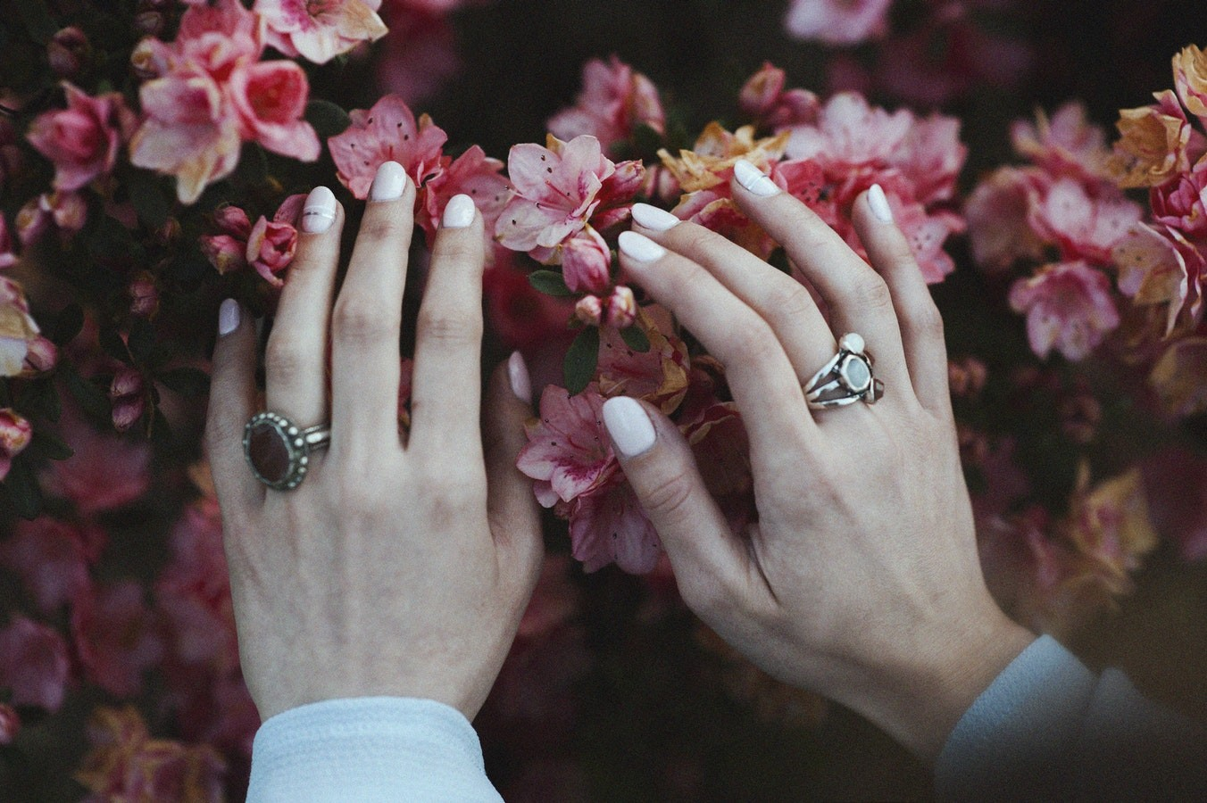 Lady's hands with white polish and rings place on a bed of pink flowers
