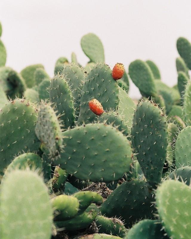 a range of cacti/cactus.